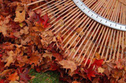 A1.2Prepara tu hogar para la llegada del otonyo-Rastrillo y hojas caidas