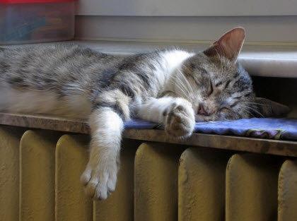 Gato tumbado en el radiador