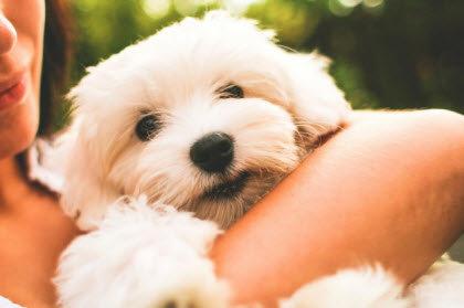 Perro cachorro blanco en brazos de su ama